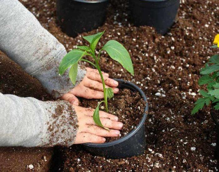 Astuces et conseils en jardinage for Conseil en jardinage