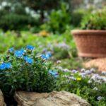 plantation-fleurs-vivaces-automne