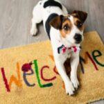 assurance-habitation-animaux-de-compagnie
