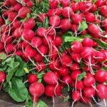 planter-radis