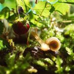 escargot-jardin