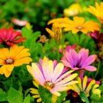 plantes-jardin