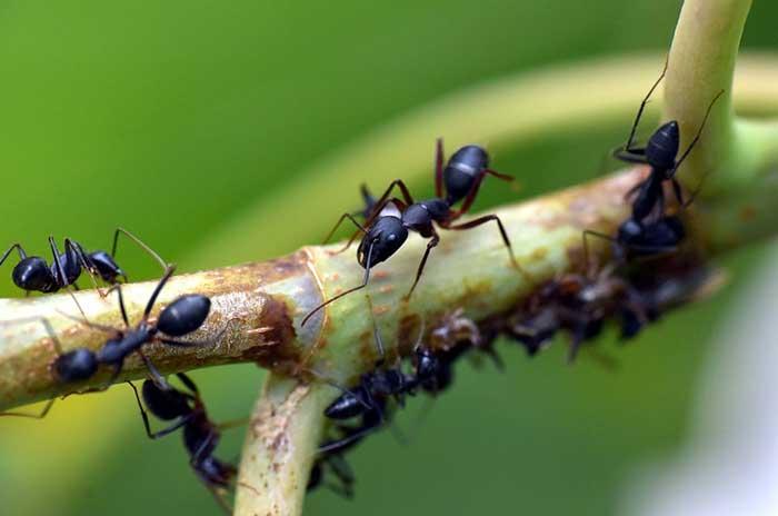 fourmis-lutter-jardin