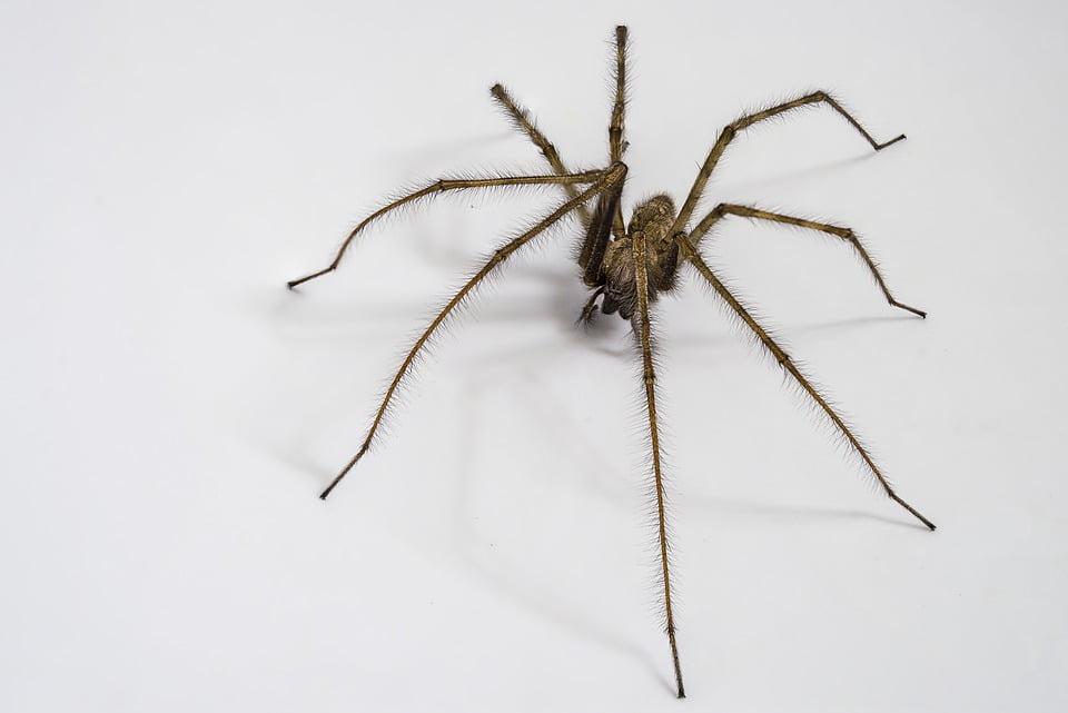 repulsif-naturel-araignee
