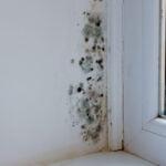 mur-humide