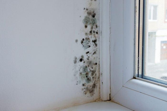 Humidité Sur Les Murs De La Maison Pourquoi Et Que Faire