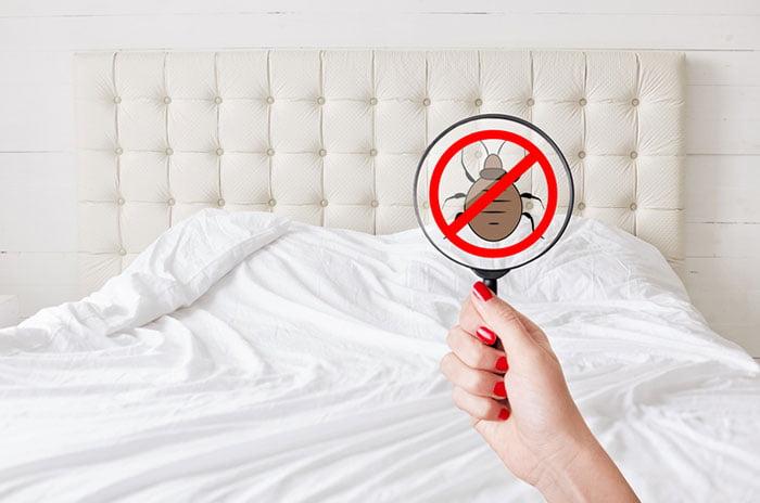 détecter les punaises de lit