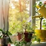 entretenir-plantes-interieur