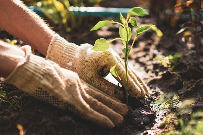 paysagiste préservation de la biodiversite