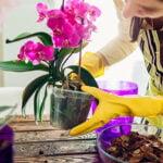 entretenir-orchidee